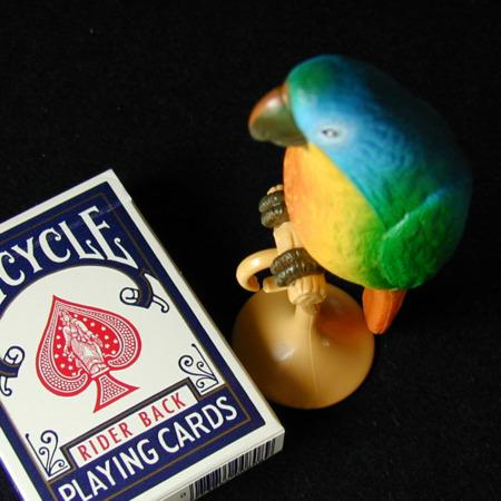 Polly Learns a Card Trick by Bruce Kalver