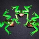 Three Frog Monte by Bob McAllister