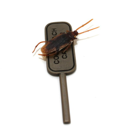 Cockroach Catcher by Brian Watson